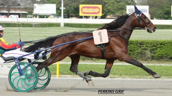 Perkins Grif Bologna